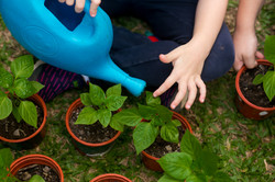 Vamos molhar as plantas?