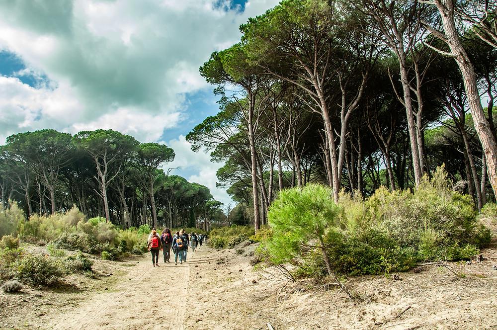 Escursioni-san-rossore