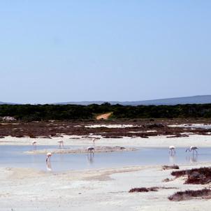 Strandkombuis - Flamingos.JPG
