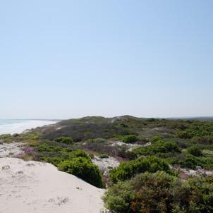 Strandkombuis - Dune Flowers.JPG