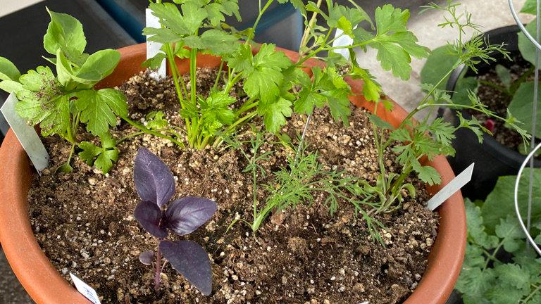 Mixed Herb Bowl