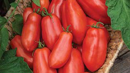 Tomato - San Marzano - 2Gal