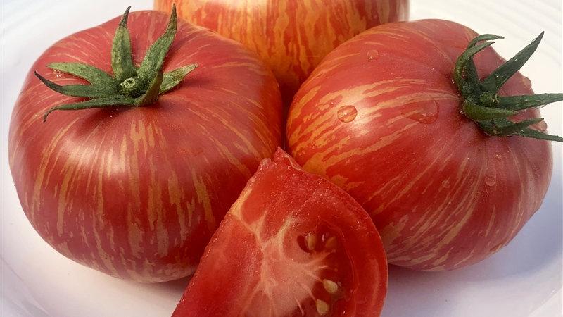 "Tomato ""Vintage Wine"" - 6"" pot"