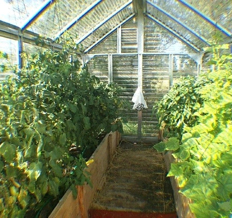 How to Set Up Your Hobby Greenhouse