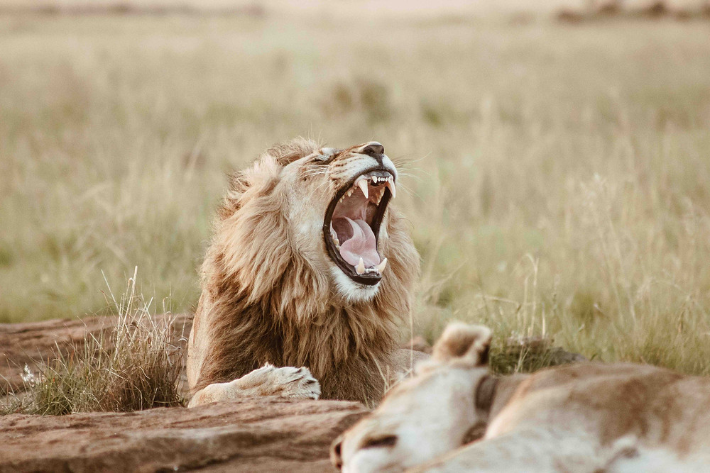 Running away from a lion