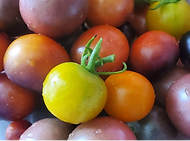 1st banner tomatoes.png