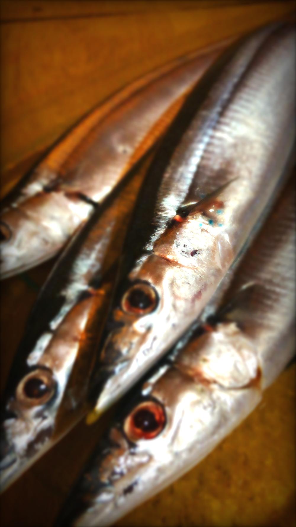 秋刀魚 さんま 長崎浜口バール明