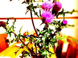 母の日は、あざみの花