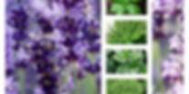 Αρωματικα φυτο