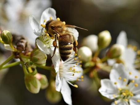 Ψεκασμοί και Μέλισσες. Τί πρέπει να προσέξουμε...