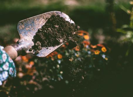 Τι είναι το pH εδάφους? Επηρεάζει την ανάπτυξη των φυτών?