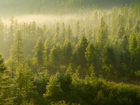 Η σημασία του δάσους..