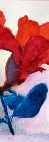 OCADU watercolor - red flower a.jpg