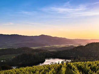 Viader Vineyards: A Jewel of Howell Mountain