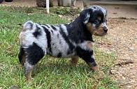 Puppy pics 10272020  10-1.jpeg