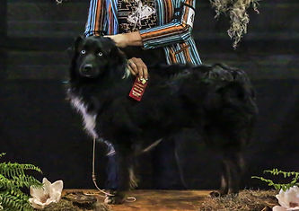 Barking on the Bayou Dash - ribbons 5.jp