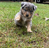 Puppy pics 10272020  4.JPG