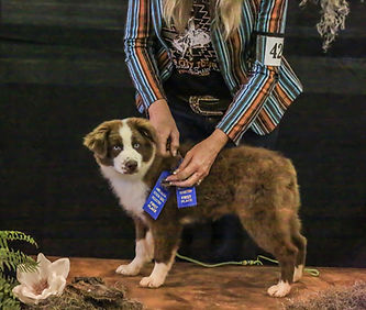 Barking on the Bayou Ginger - ribbons 12