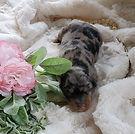 Annie Oakley12.jpg