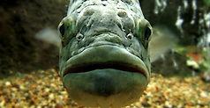 Fish face.jpg