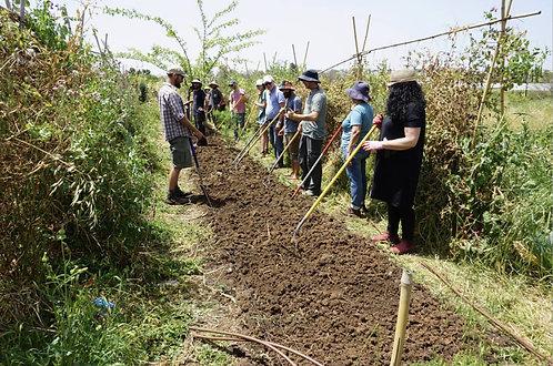 סדנה להקמת גן ירק אקולוגי-גינה מזינה - אלכס צ׳מודנוב