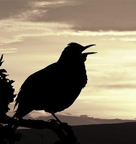 sunrise-2360296_edited_edited.jpg