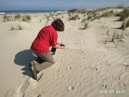 הרצאת זום: גששות באזור החוף הצפוני - עופר אבל