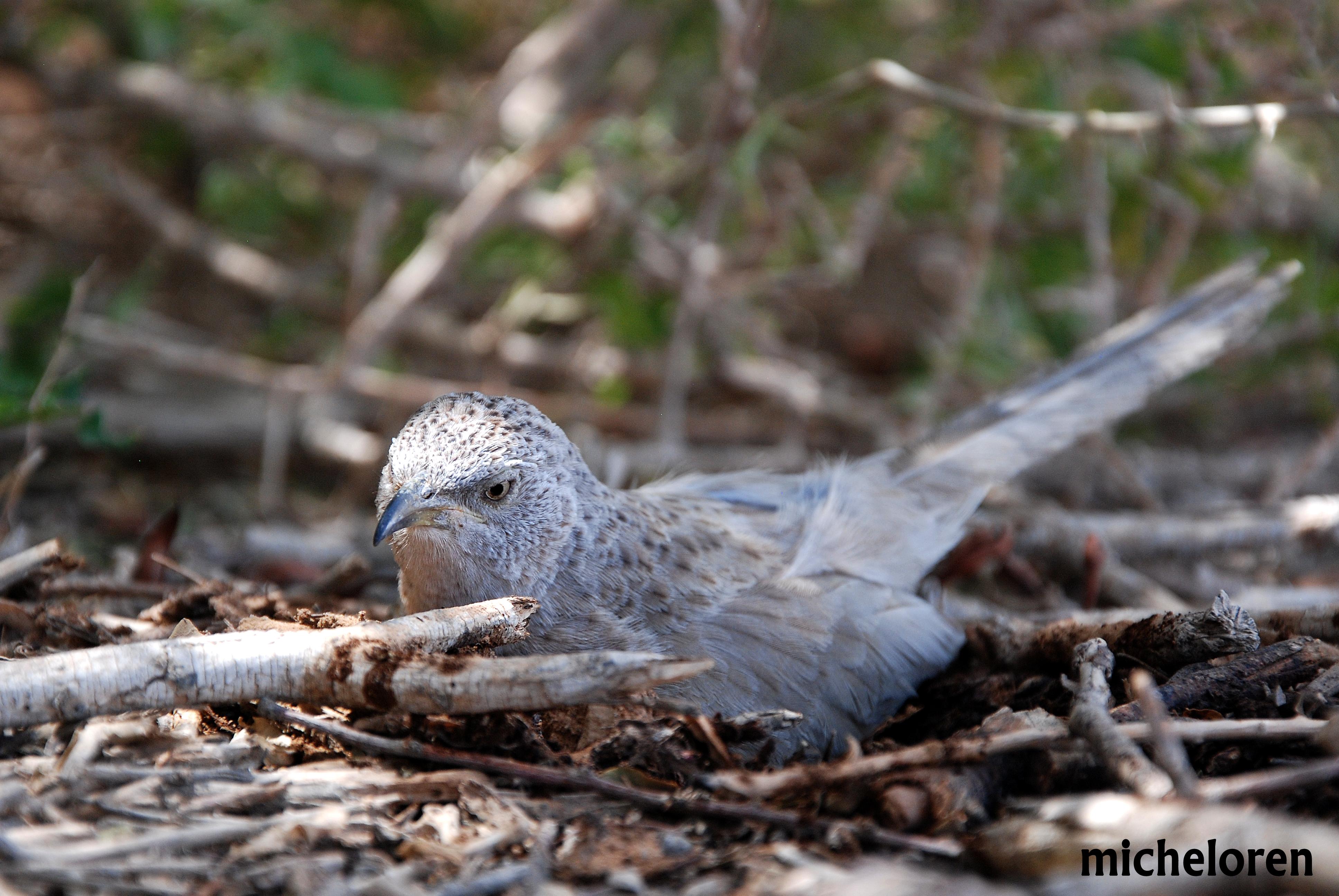 סדנת שפת הציפורים בחצבה מאי 2015