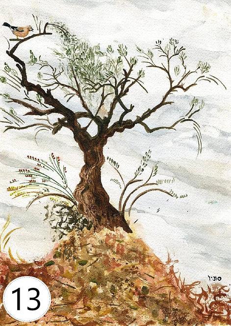 ציורים בהשראת הטבע, סדרה 1 - חן רכטמן