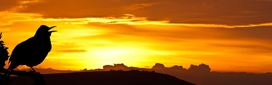 sunrise-2360296.jpg