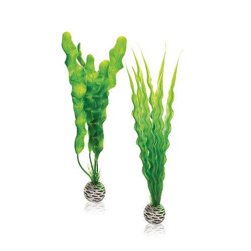 Pianta verde 46056 per acquario
