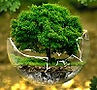 earth save.jpg