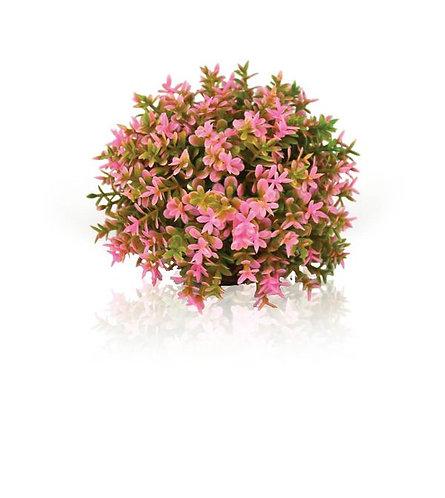 Topiaria rotonda rosa 46088 per acquario