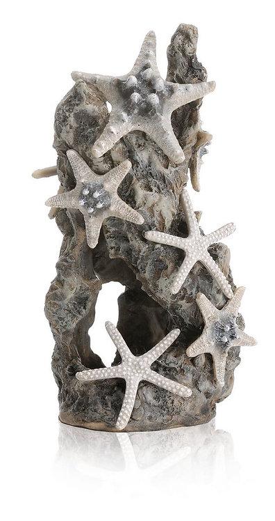 Stella marina in roccia 46132 per acquario