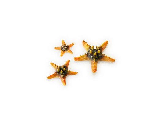 Set 3 stelle marine colorate per acquario