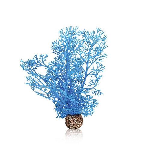 Sea Fans Alcionace blu per acquario