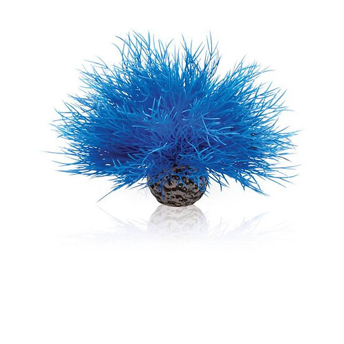 Giglio di mare 46076 blu per acquario