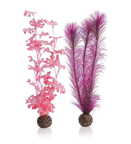 Alghe rosa medie 46082 per acquario