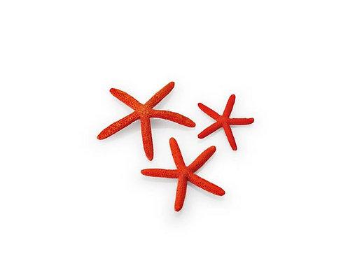 Set 3 stelle marine vari colori per acquario