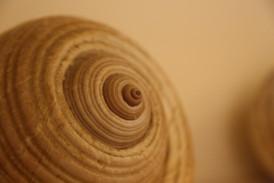 Shell close up
