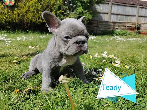 Teady (4).jpg