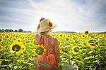 sunflowers-3640935.jpg