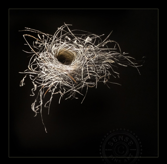 SENSE_fine_art_Lonas_PineNeedle_Nest_34x34in