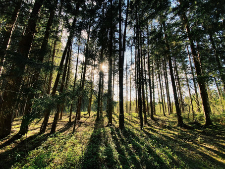 What exactly is 'forest bathing'?