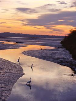 Arcata Marsh At Sunset