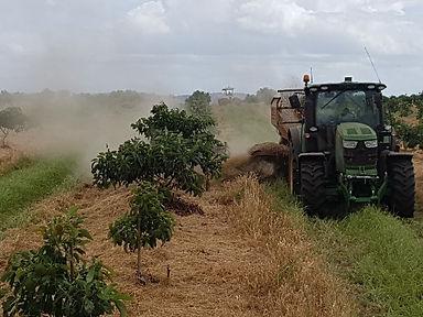 spraying trees.jpg