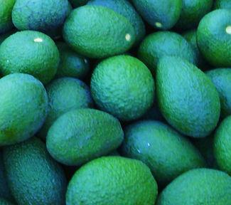 A. Haas Avocadoes.jpg