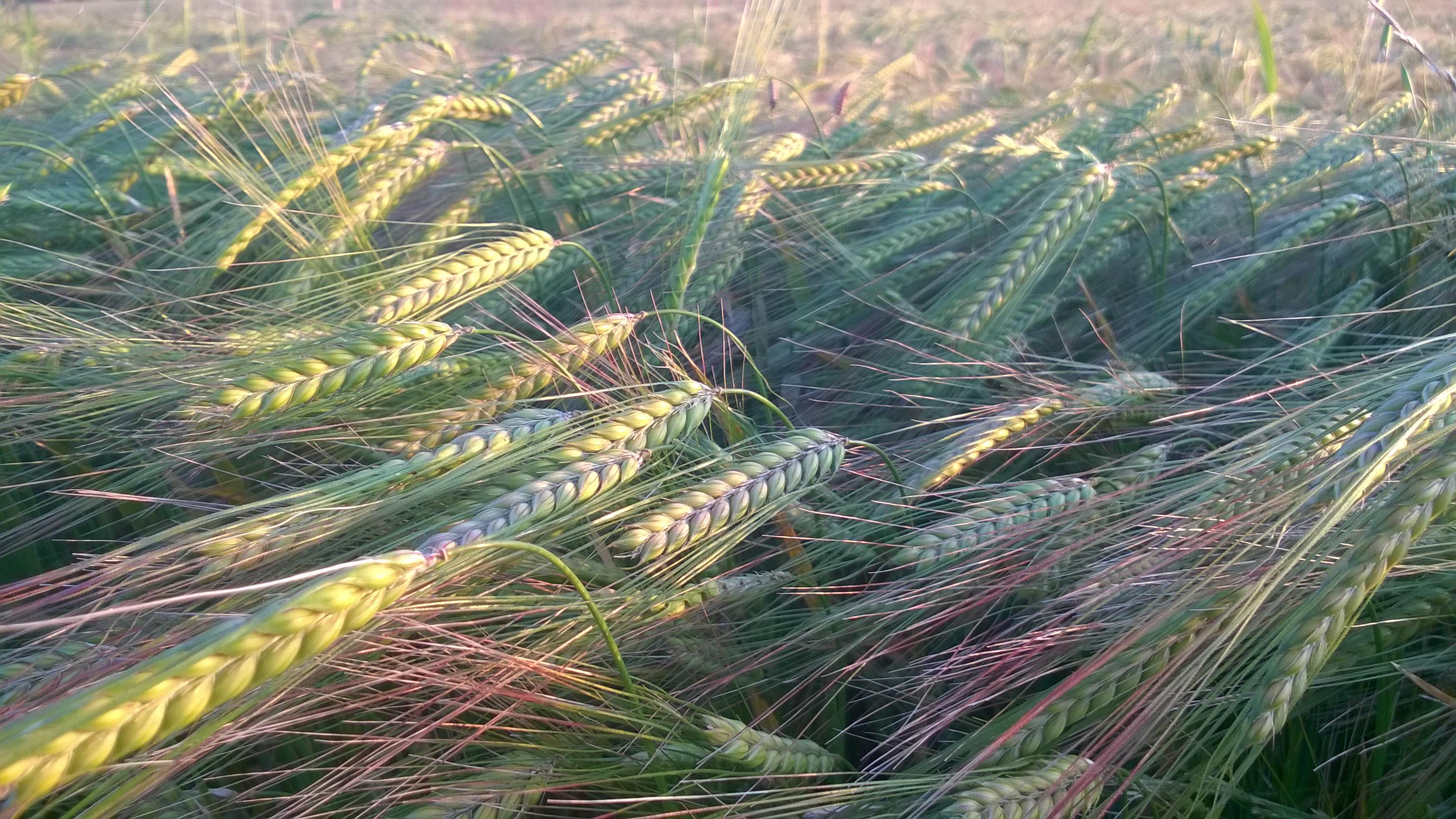 GRUPO JORGE Organic Farming -Huesca