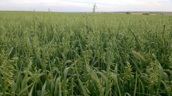GJ Organic Farming - C.de Monegros