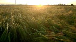 GRUPO JORGE - Agricultura Ecológica